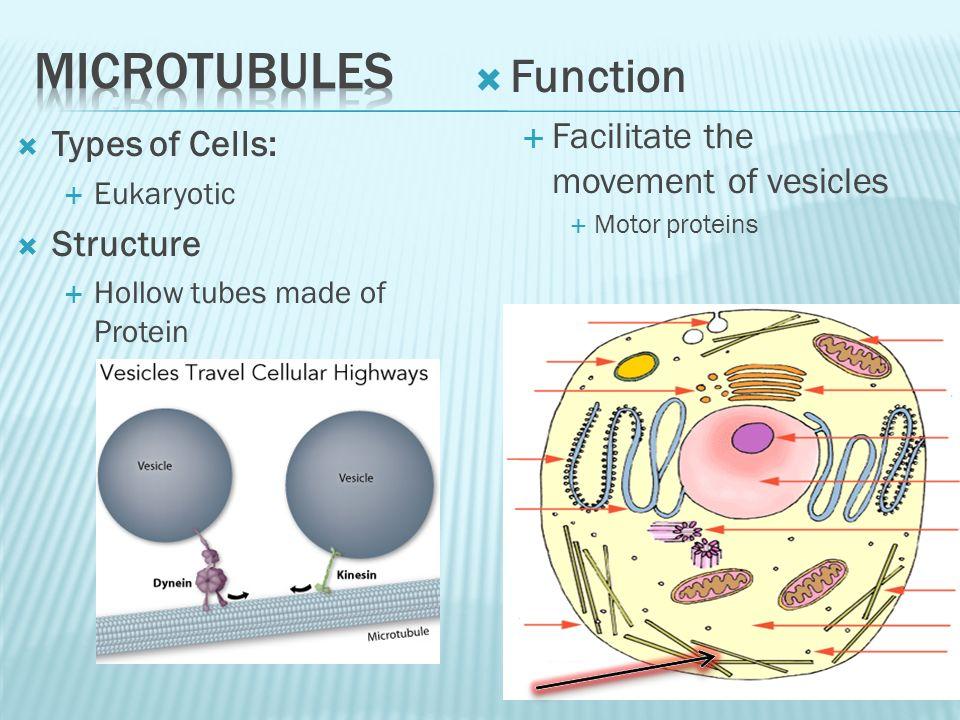 vesicle function - 960×720