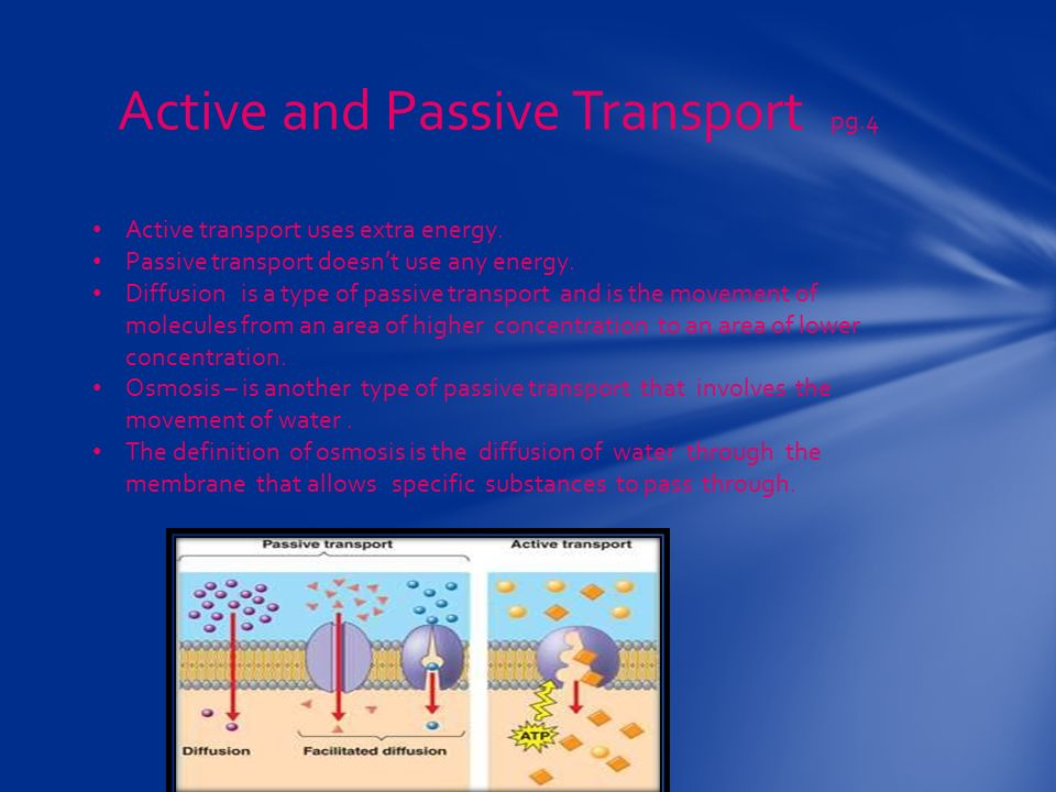 Active and Passive Transport pg.4 Active transport uses extra energy.