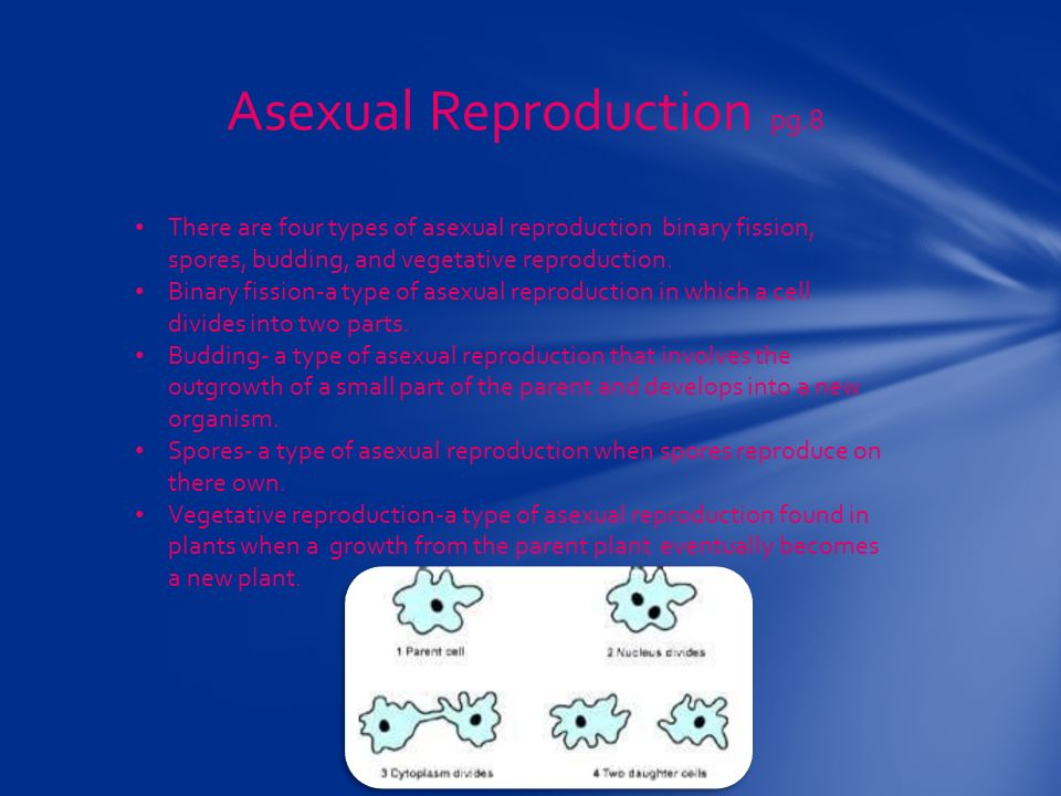 Asexual Reproduction pg.8 There are four types of asexual reproduction binary fission, spores, budding, and vegetative reproduction.