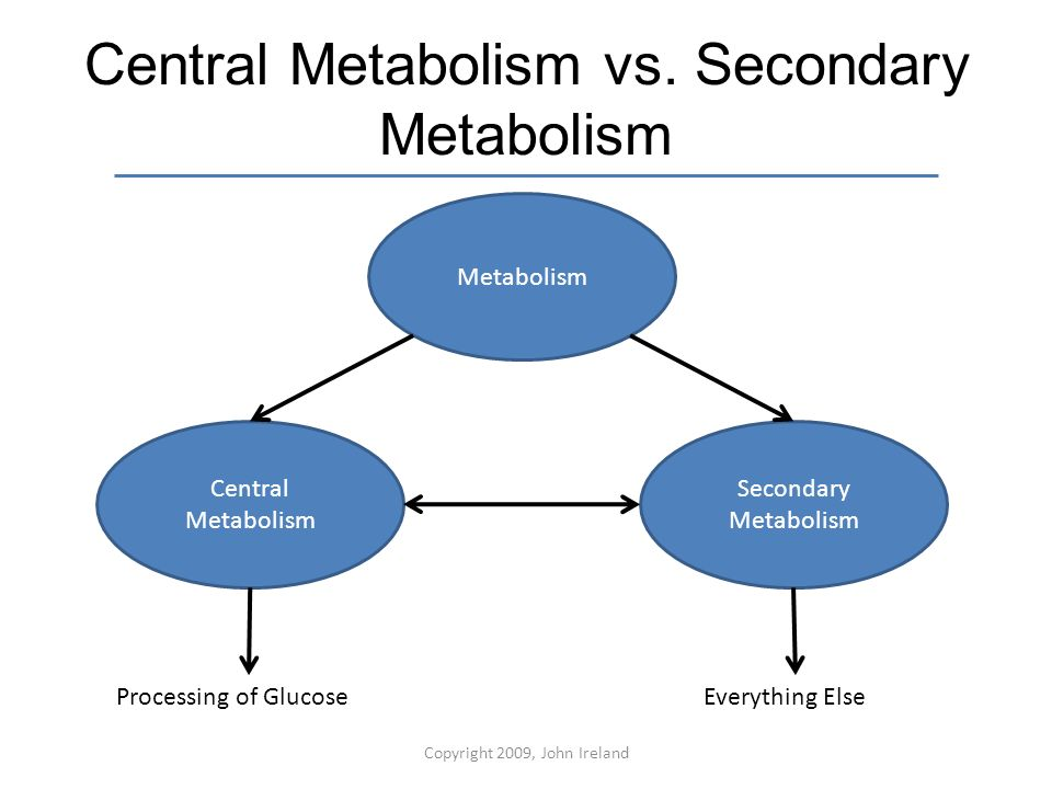 Metabolism Chapter 5 Metabolism This Is A Simple Diagram Of The