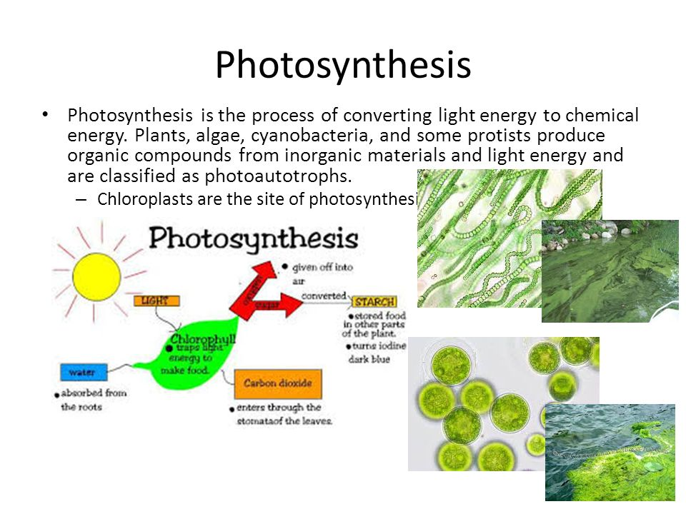 understanding the process of photosynthesis Photosynthesis is a process that all life on earth depends on photosynthetic organisms convert more than 10 9 metric tons of atmospheric co 2 into biomass per year.