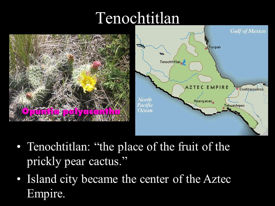Tenochtitlan Tenochtitlan: the place of the fruit of the prickly pear cactus. Island city became the center of the Aztec Empire.