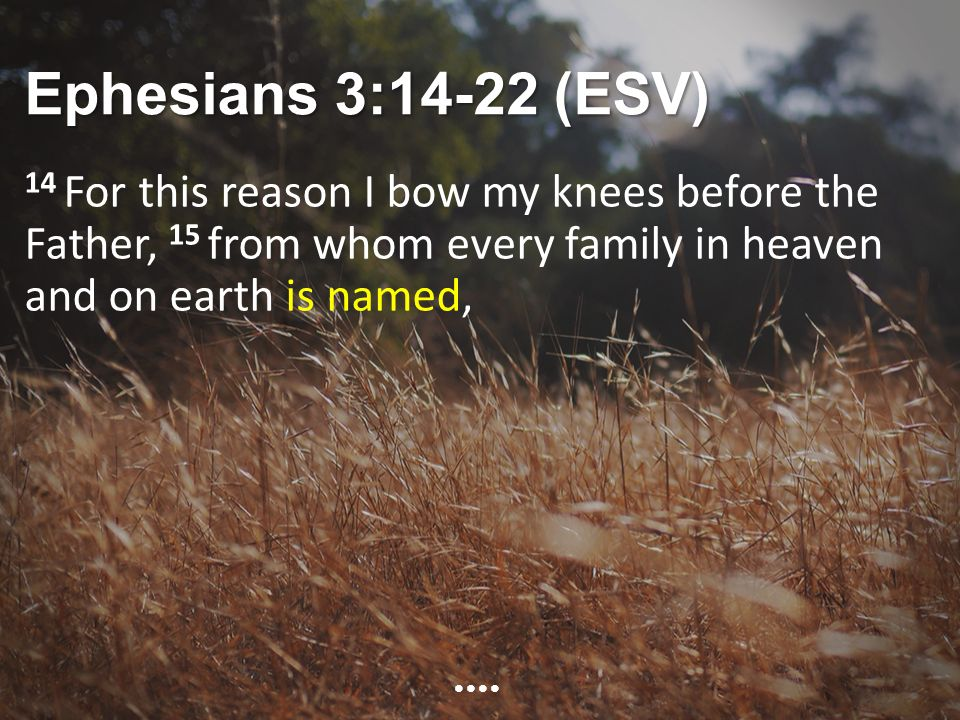 Ephesians 3:14-22 (ESV) 14 For this reason I bow my knees before the Father, 15 from whom every family in heaven and on earth is named,