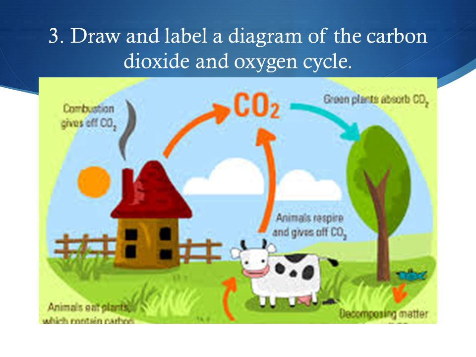 Life science review by sydney george 1 draw and label a diagram draw and label a diagram of the carbon dioxide and oxygen cycle ccuart Choice Image