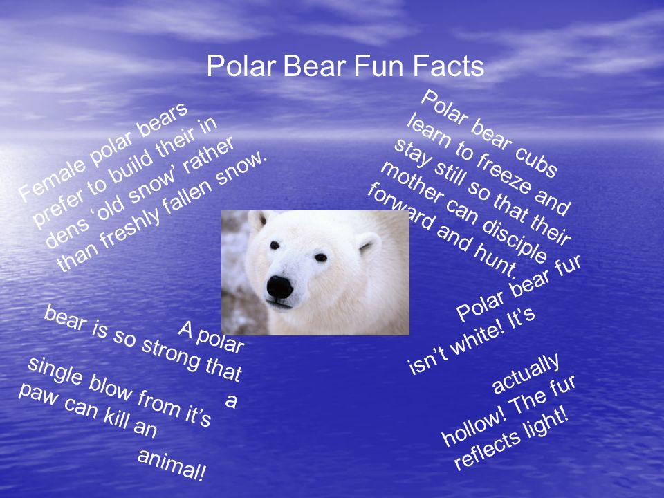 slide_3 polar bears by hailey holder and sierra tucker strong front paws