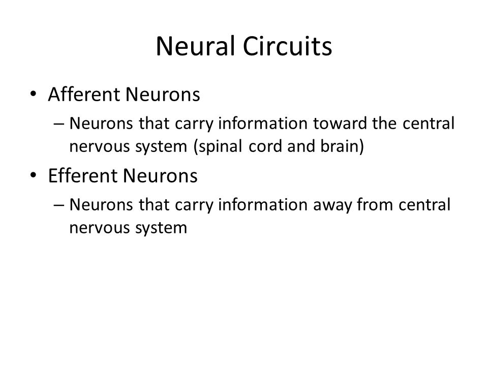 Neural Circuits Neurons are interconnected to form a circuit, circuits form a neural system DIVERGENCE: Output from one neuron onto many.