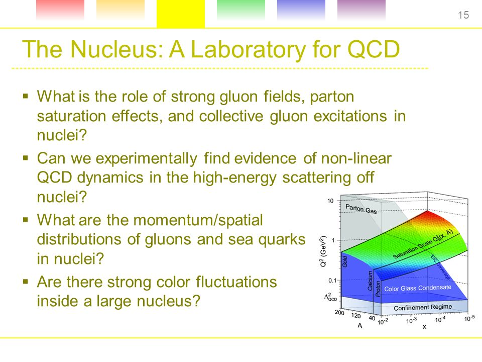 The Nucleus: A Laboratory for QCD  What is the role of strong gluon fields, parton saturation effects, and collective gluon excitations in nuclei.