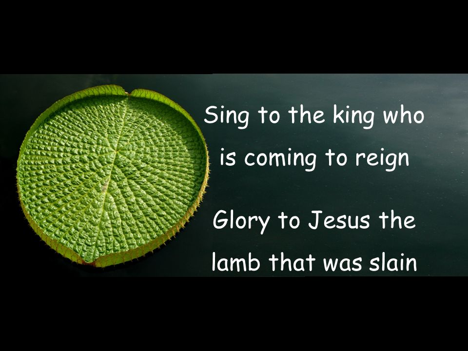Sing to the king who is coming to reign Glory to Jesus the lamb that was slain