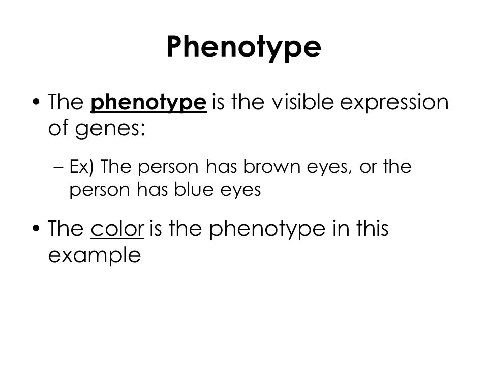 Phenotype The phenotype is the visible expression of genes: –Ex) The person has brown eyes, or the person has blue eyes The color is the phenotype in this example