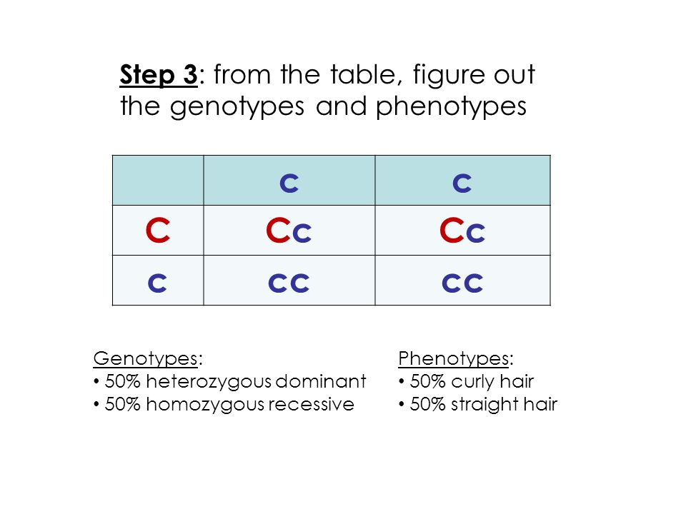 Step 3 : from the table, figure out the genotypes and phenotypes Genotypes: 50% heterozygous dominant 50% homozygous recessive Phenotypes: 50% curly hair 50% straight hair cc CCcCcCcCc ccc