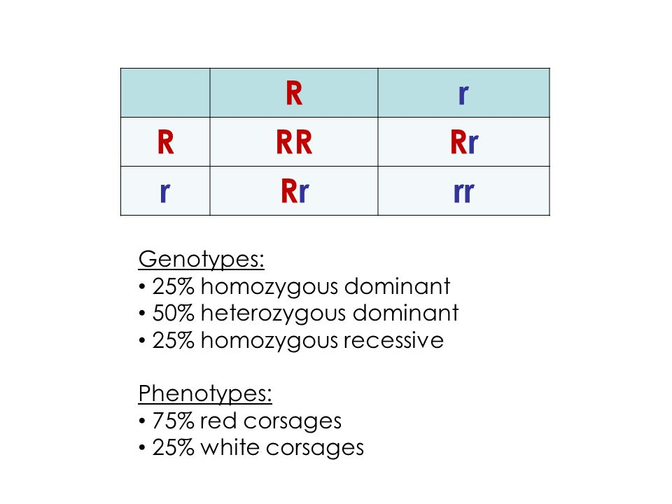 Rr RRRRrRr rRrRrrr Genotypes: 25% homozygous dominant 50% heterozygous dominant 25% homozygous recessive Phenotypes: 75% red corsages 25% white corsages