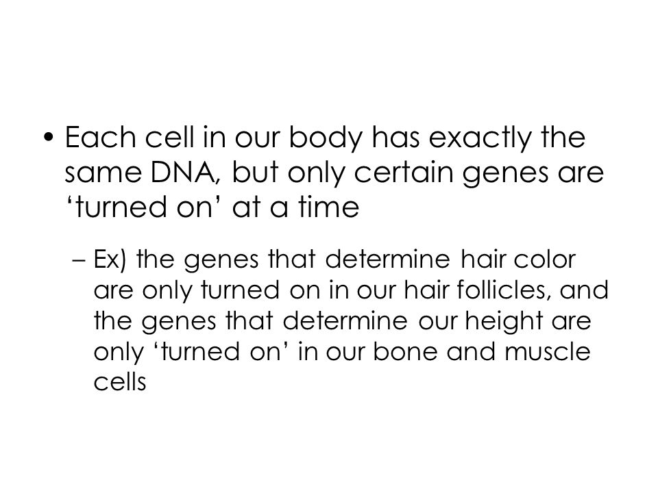 Each cell in our body has exactly the same DNA, but only certain genes are 'turned on' at a time –Ex) the genes that determine hair color are only turned on in our hair follicles, and the genes that determine our height are only 'turned on' in our bone and muscle cells