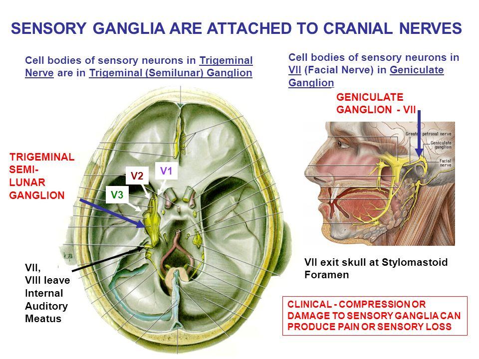 semilunar ganglion