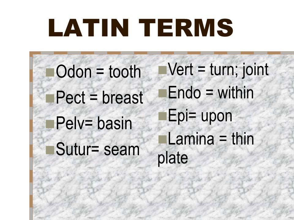 Appendicular Skeleton Lecture Notes ANATOMY. LATIN TERMS Odon ...