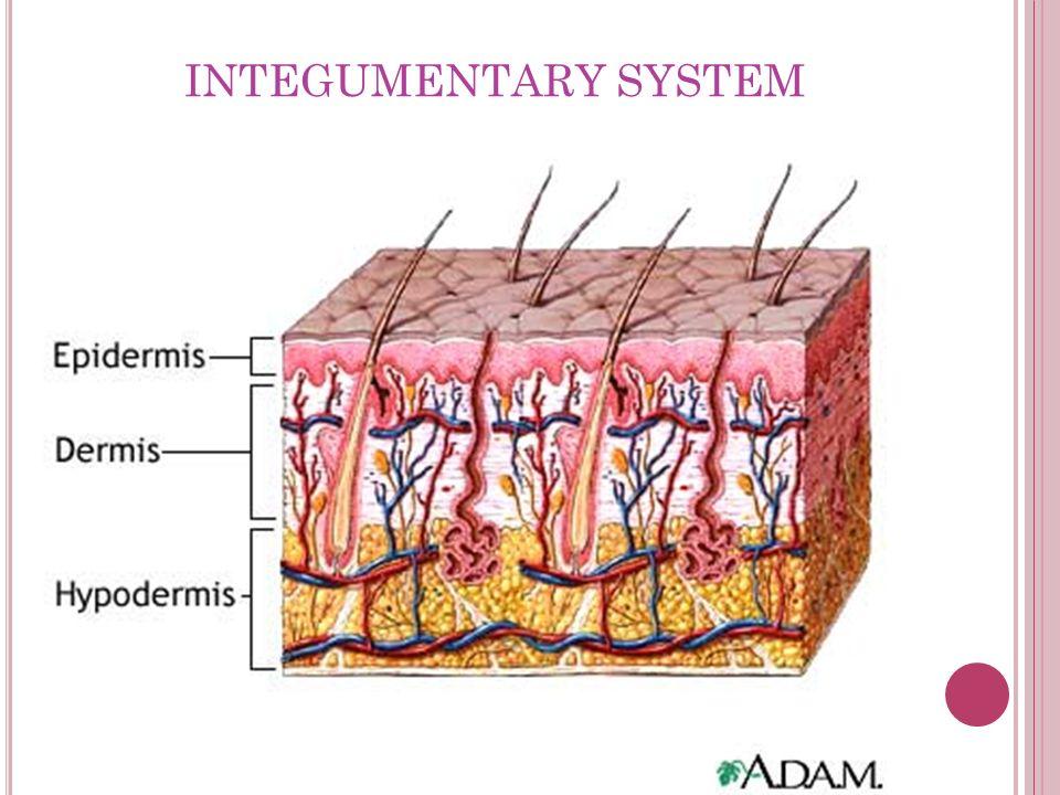 Physical Examination Afnany Toonsi Integumentary System Ppt