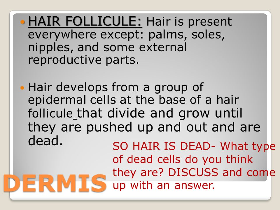 HAIR FOLLICULE: HAIR FOLLICULE: Hair is present everywhere except: palms, soles, nipples, and some external reproductive parts.