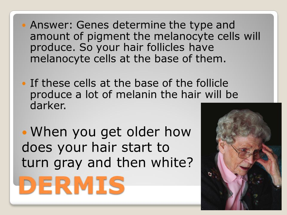 DERMIS Answer: Genes determine the type and amount of pigment the melanocyte cells will produce.