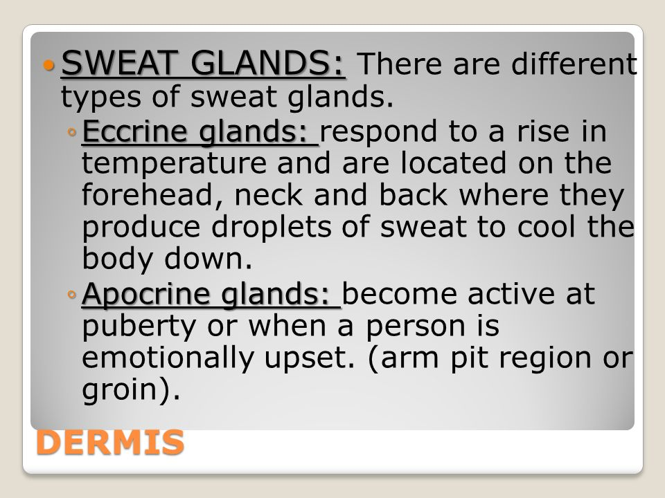 DERMIS SWEAT GLANDS: SWEAT GLANDS: There are different types of sweat glands.