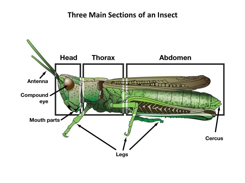 distinguishing characteristics of arthropods