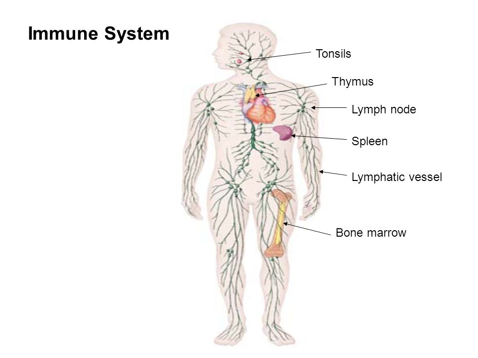 lorazepam immune system