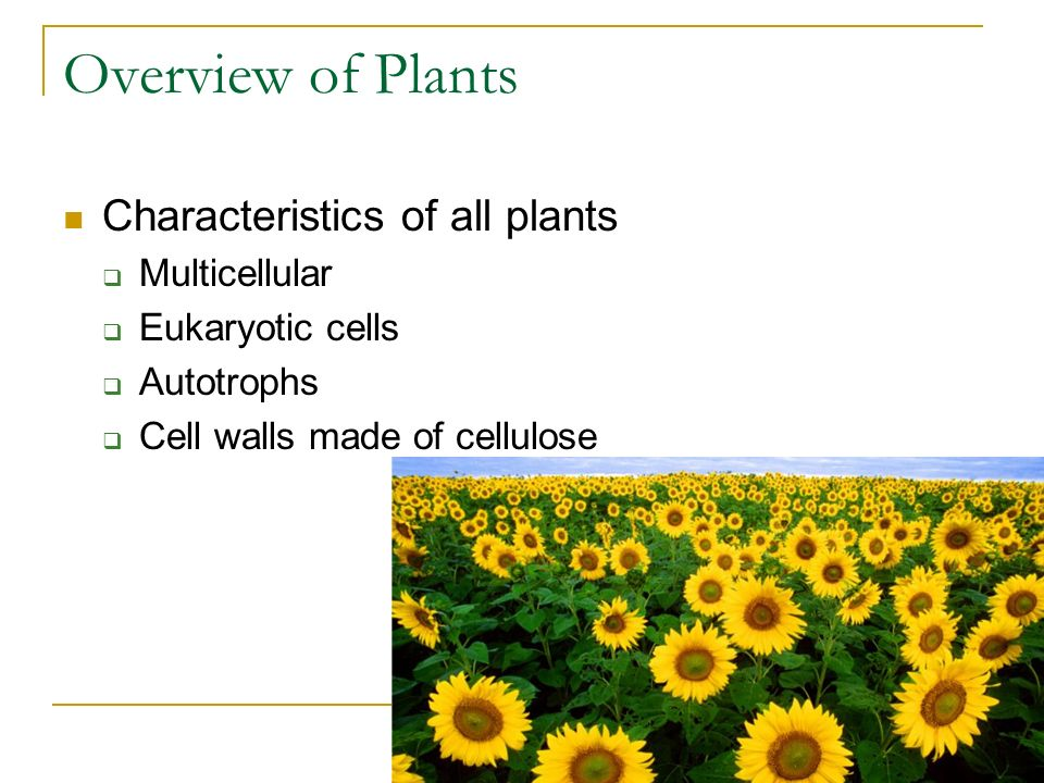 Overview of Plants Characteristics of all plants  Multicellular  Eukaryotic cells  Autotrophs  Cell walls made of cellulose