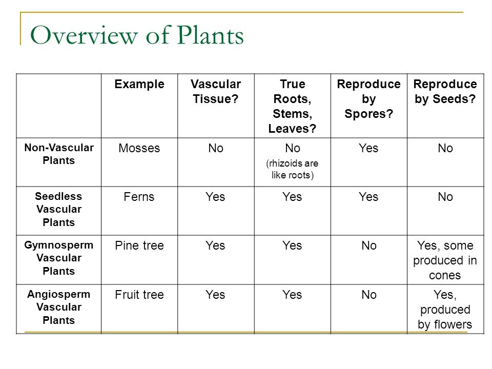 Overview of Plants ExampleVascular Tissue. True Roots, Stems, Leaves.