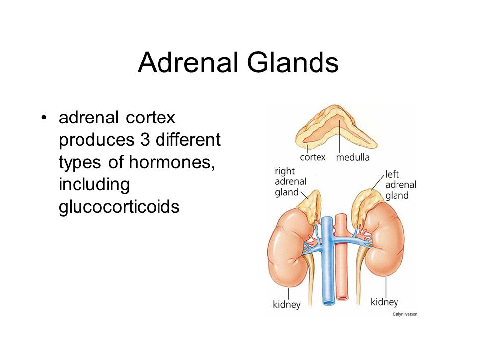 Adrenal Glands adrenal cortex produces 3 different types of hormones, including glucocorticoids
