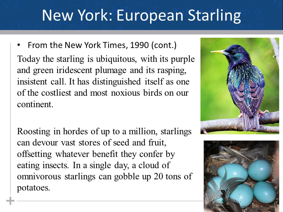 Ecology Population Ecology Part 3  New York: European Starling From