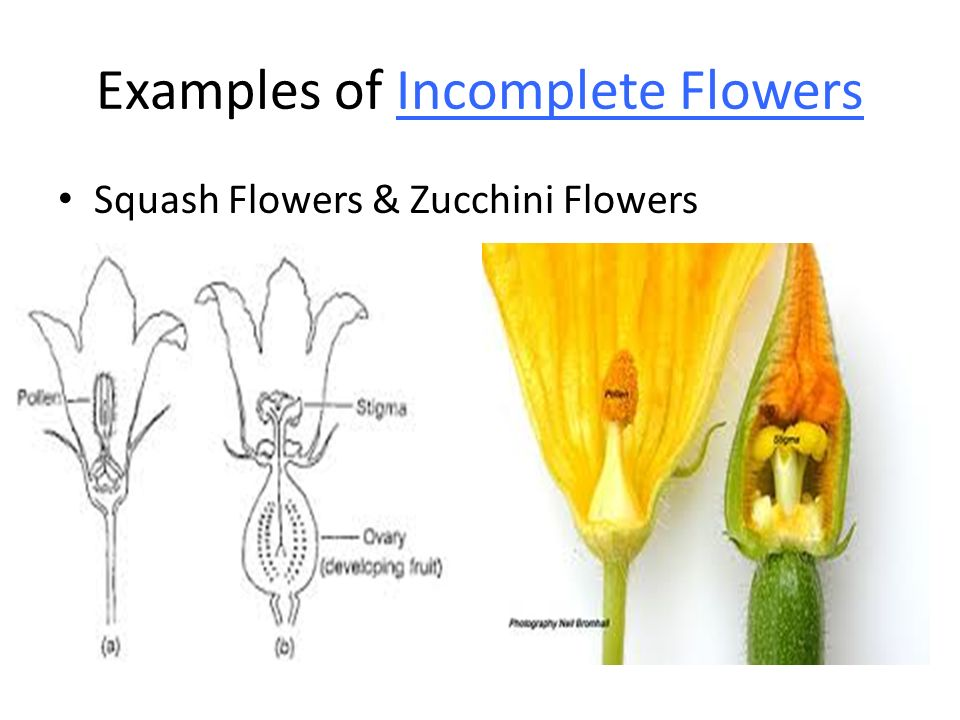 Perfect Incomplete Flower Diagram Complete Wiring Diagrams