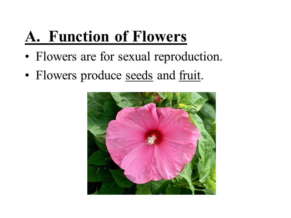 A. Function of Flowers Flowers are for sexual reproduction. Flowers produce seeds and fruit.