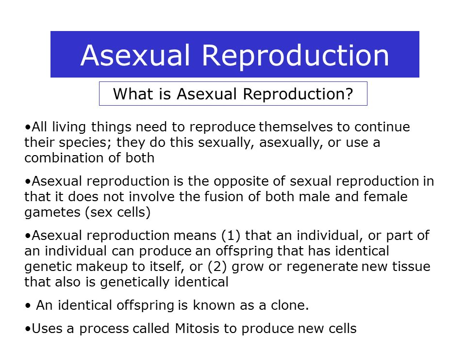 Explain fragmentation in asexual reproduction new combinations