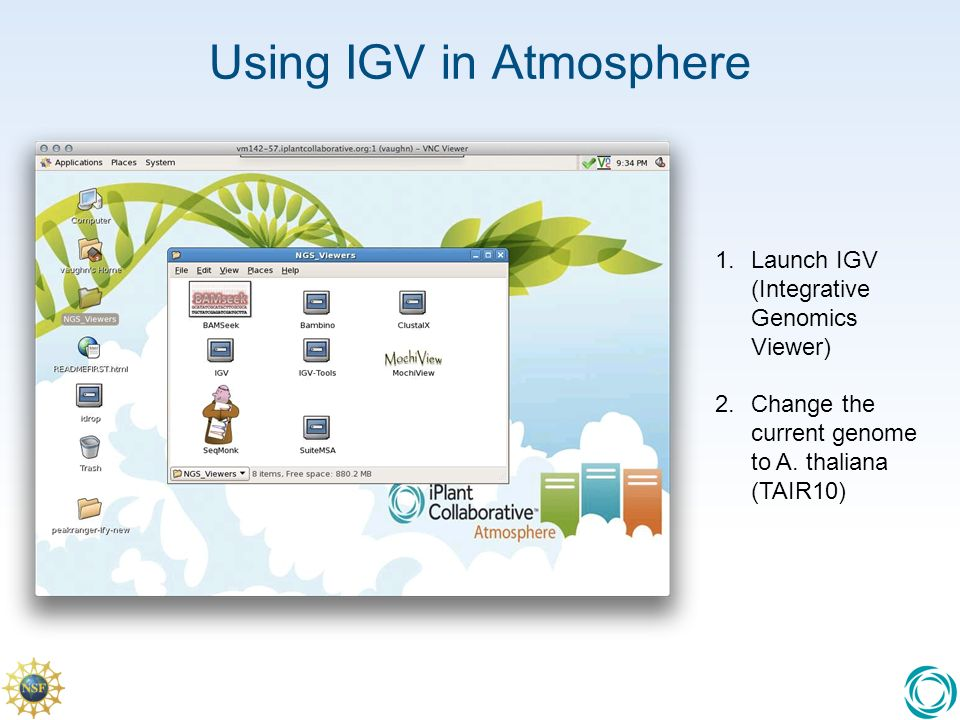 Using IGV in Atmosphere 1.Launch IGV (Integrative Genomics Viewer) 2.Change the current genome to A.