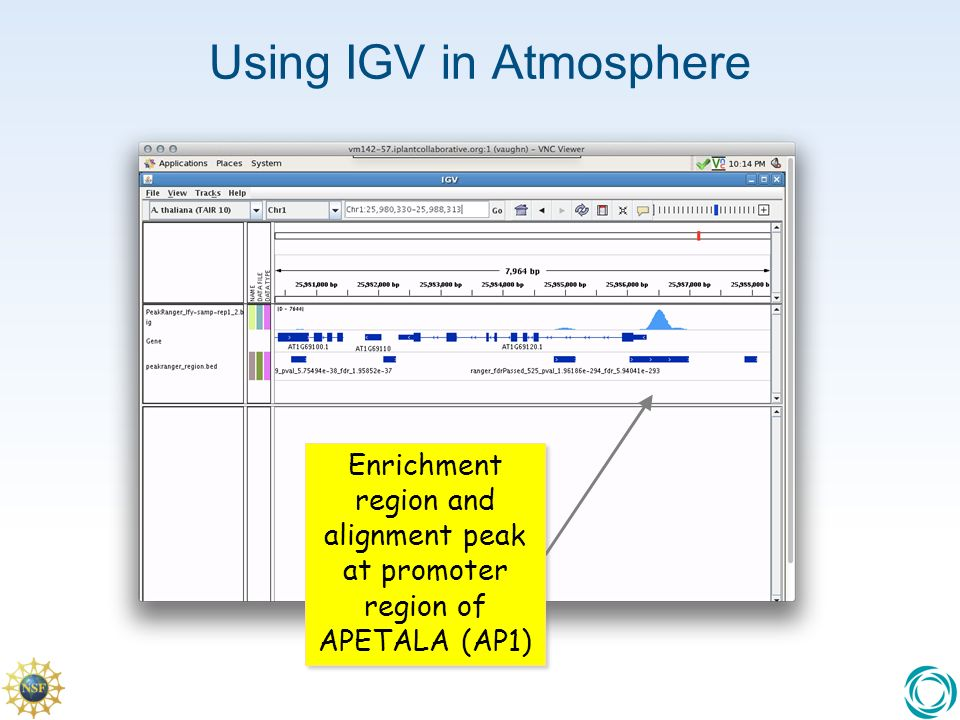 Using IGV in Atmosphere Enrichment region and alignment peak at promoter region of APETALA (AP1)