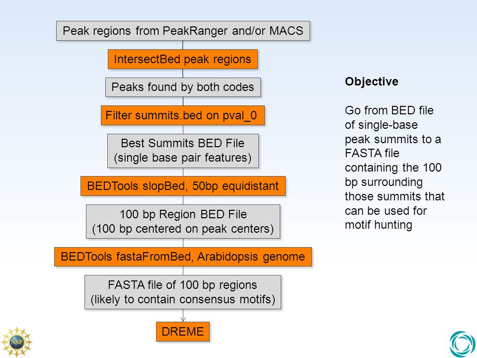 Best Summits BED File (single base pair features) 100 bp Region BED File (100 bp centered on peak centers) 100 bp Region BED File (100 bp centered on peak centers) FASTA file of 100 bp regions (likely to contain consensus motifs) FASTA file of 100 bp regions (likely to contain consensus motifs) BEDTools slopBed, 50bp equidistant BEDTools fastaFromBed, Arabidopsis genome DREME Filter summits.bed on pval_0 Objective Go from BED file of single-base peak summits to a FASTA file containing the 100 bp surrounding those summits that can be used for motif hunting Peak regions from PeakRanger and/or MACS IntersectBed peak regions Peaks found by both codes