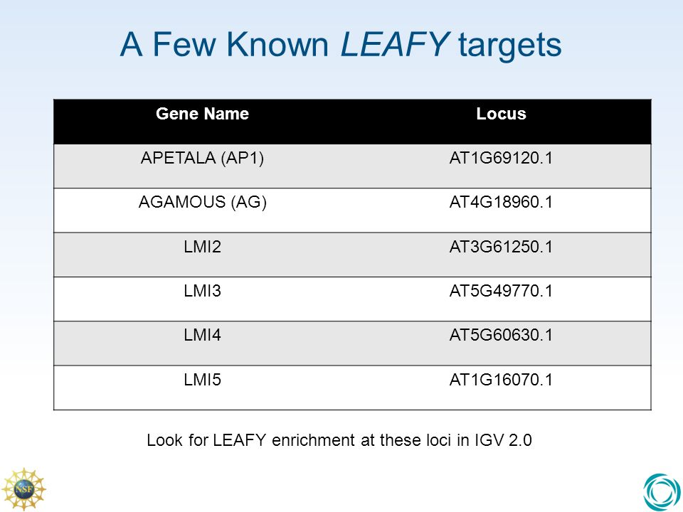 A Few Known LEAFY targets Gene NameLocus APETALA (AP1)AT1G AGAMOUS (AG)AT4G LMI2AT3G LMI3AT5G LMI4AT5G LMI5AT1G Look for LEAFY enrichment at these loci in IGV 2.0