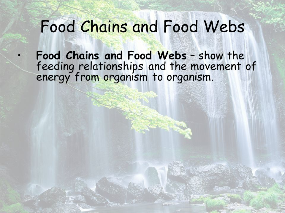 Food Chains and Food Webs Food Chains and Food Webs – show the feeding relationships and the movement of energy from organism to organism.