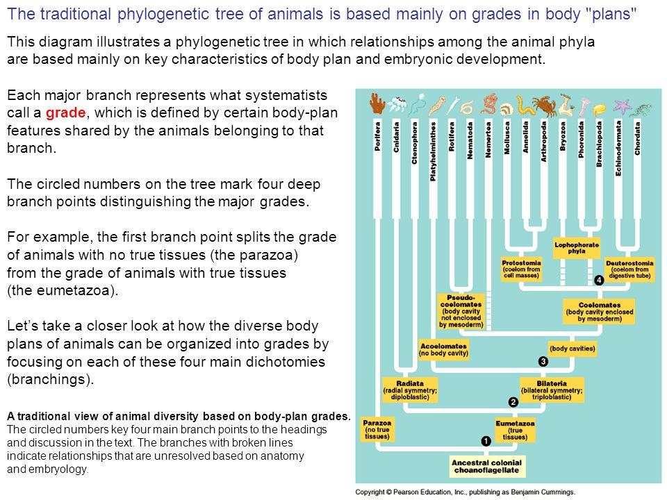 Animal Characteristics Diagram - Enthusiast Wiring Diagrams •