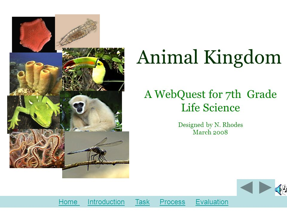 2 Animal Kingdom A Webquest For 7th Grade Life Science Designed By N Rhodes March 2008 Home Home Introduction Task Process
