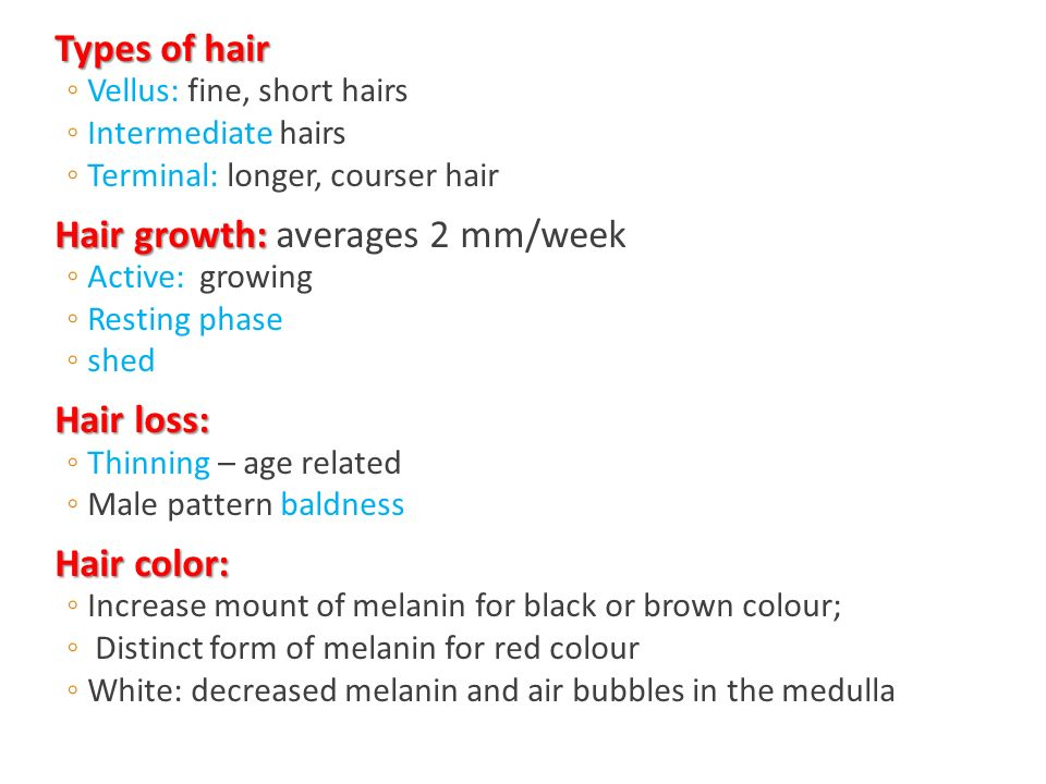 Types of hair Types of hair ◦Vellus: fine, short hairs ◦Intermediate hairs ◦Terminal: longer, courser hair Hair growth: Hair growth: averages 2 mm/week ◦Active: growing ◦Resting phase ◦shed Hair loss: Hair loss: ◦Thinning – age related ◦Male pattern baldness Hair color: Hair color: ◦Increase mount of melanin for black or brown colour; ◦ Distinct form of melanin for red colour ◦White: decreased melanin and air bubbles in the medulla