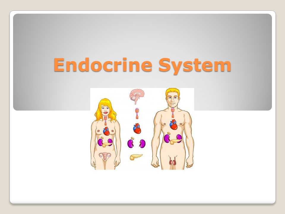 Endocrine System Hormone A Chemical Messenger That Is Released. 1 Endocrine System. Worksheet. Endocrine System Vocabulary Worksheet At Mspartners.co