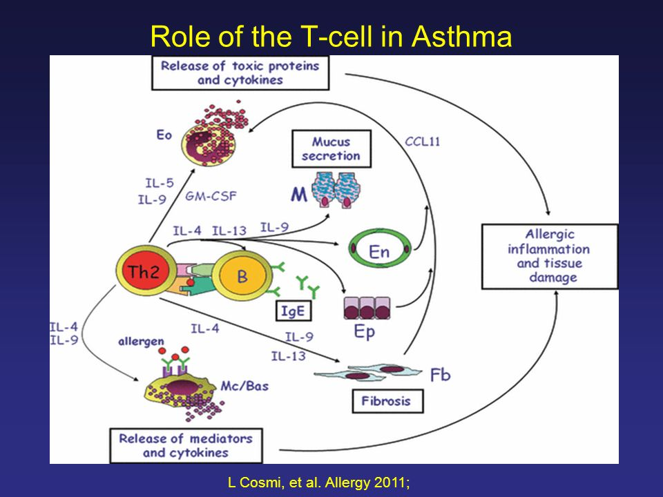 T cell immunoregulation and the response to immunotherapy harold s 2 role of the t cell in asthma l cosmi et al allergy 2011 ccuart Gallery