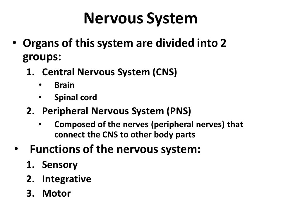 explain the functions of the nervous system