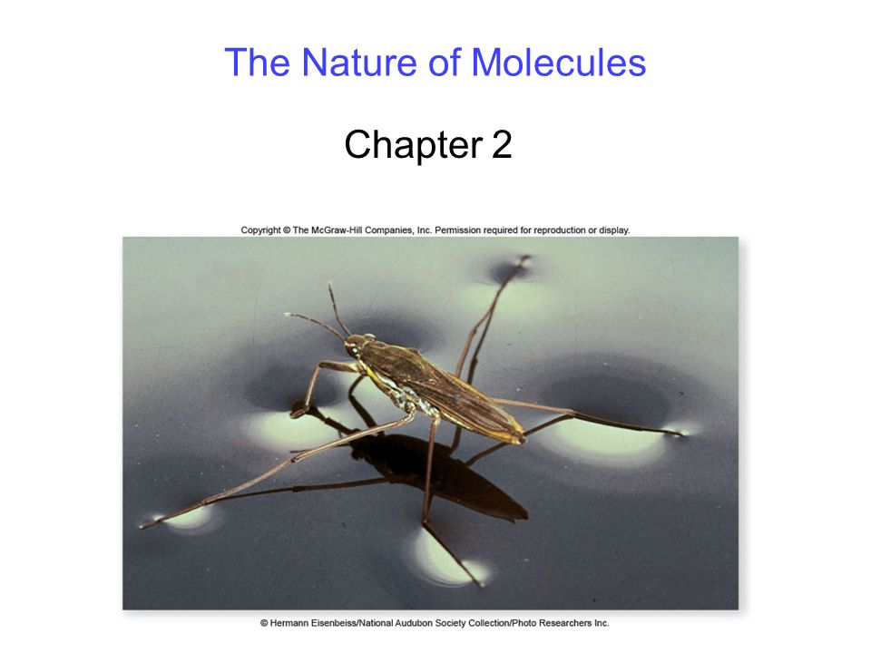 The Nature of Molecules Chapter 2