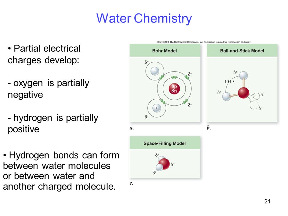 21 Water Chemistry Partial electrical charges develop: - oxygen is partially negative - hydrogen is partially positive Hydrogen bonds can form between water molecules or between water and another charged molecule.