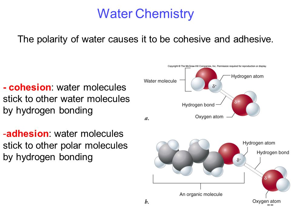 22 Water Chemistry - cohesion: water molecules stick to other water molecules by hydrogen bonding -adhesion: water molecules stick to other polar molecules by hydrogen bonding The polarity of water causes it to be cohesive and adhesive.