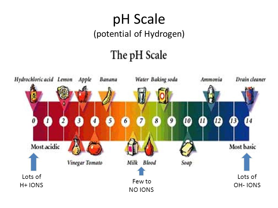 pH Scale (potential of Hydrogen) Lots of H+ IONS Lots of OH- IONS Few to NO IONS