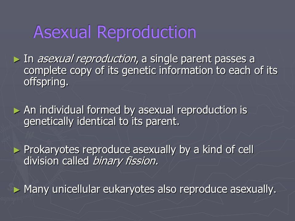 Prokaryotes reproduce asexually by binary fission animation