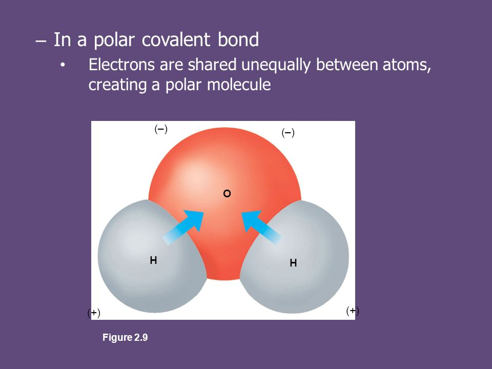 – In a polar covalent bond Electrons are shared unequally between atoms, creating a polar molecule (–) (+) O H H Figure 2.9