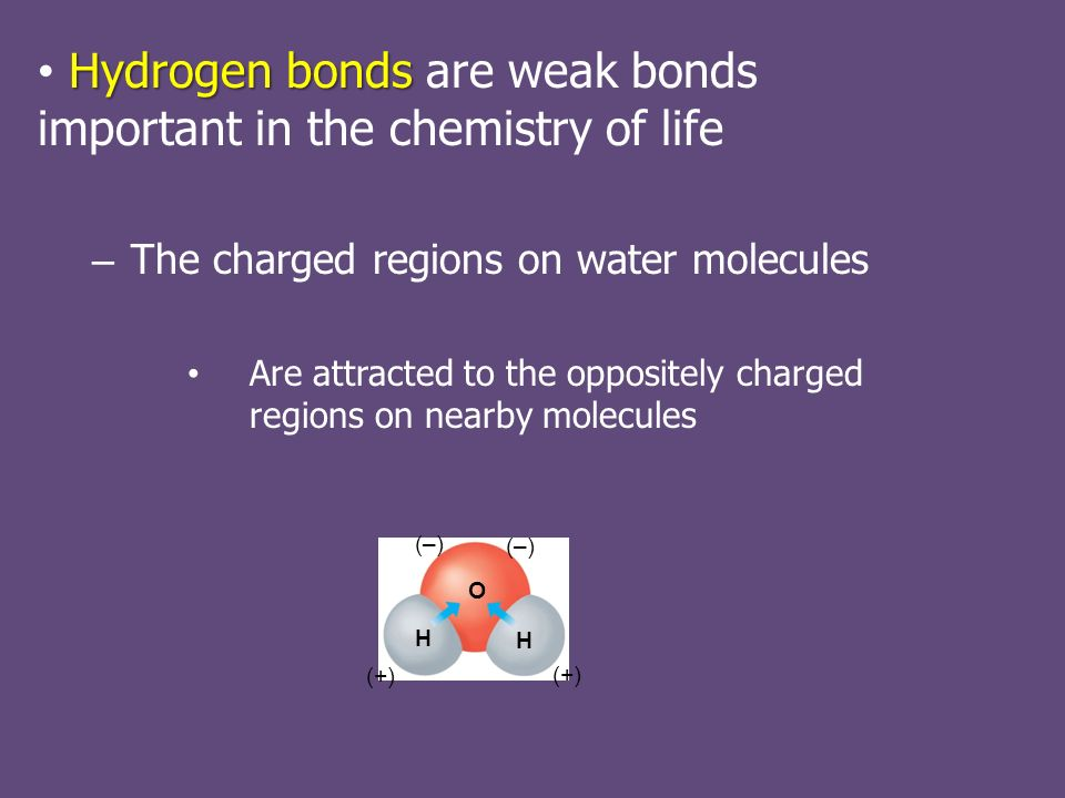 Hydrogen bonds Hydrogen bonds are weak bonds important in the chemistry of life – The charged regions on water molecules Are attracted to the oppositely charged regions on nearby molecules (–) (+) O H H