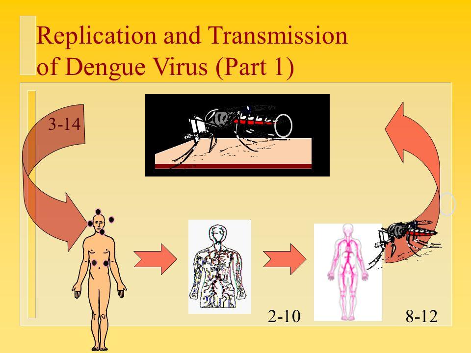 Dengue Fever Infects La Fte De >> Why Do We Care About It What Is Dengue Is It Endemic In Ksa